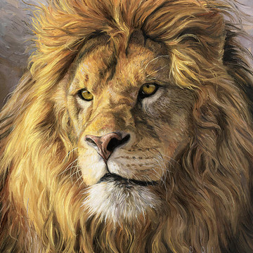African Lions Collection