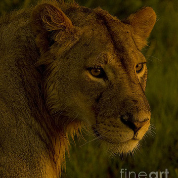 African Mammals-Stock Images Collection