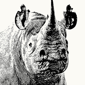 African Wildlife in Graphic Black and White