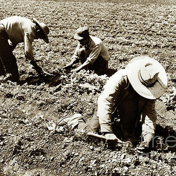 Agriculture in California