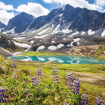Alaska Summer Collection