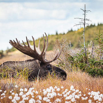 Alaska Wildlife Collection
