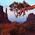 American Southwest Collection
