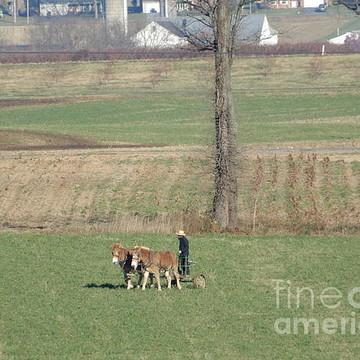 Amish Autumn Collection