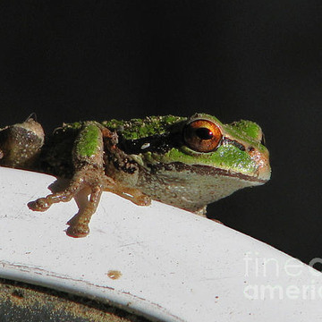 Amphibian Delights Collection