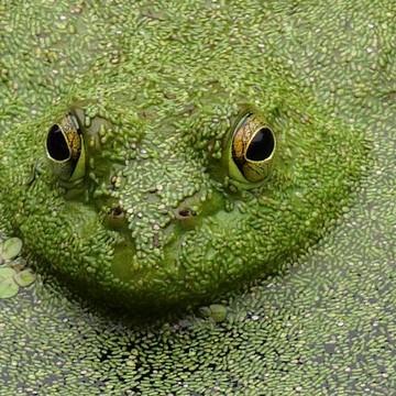 Amphibians Collection