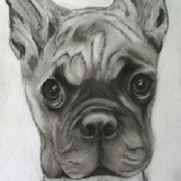 Animals - Drawings or Sketches Collection