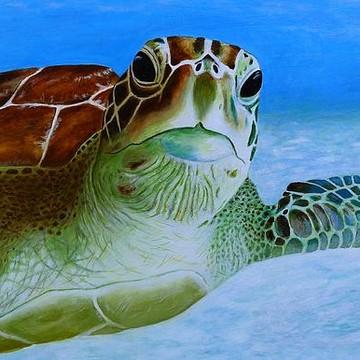 Animals & Marine Collection