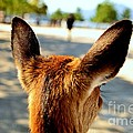 Animals - Miscellaneous Collection