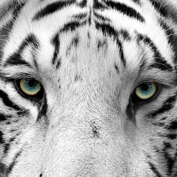 Animals & Wildlife Collection