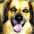 Animals and Pet Portraits