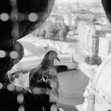 Animals - Birds Collection