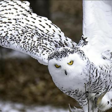 Animals Birds of Prey Collection