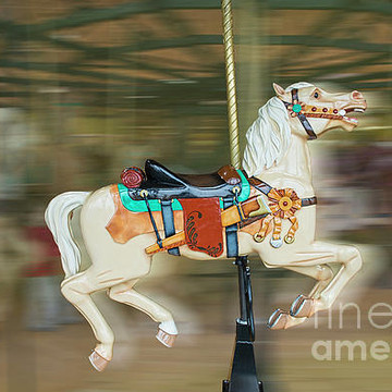 Animals Carousel Horses Collection