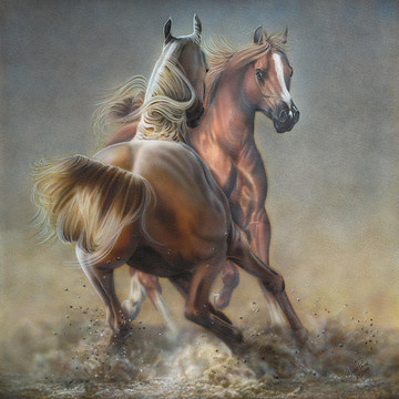 Animals- Horses Collection