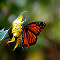 Animals Insects Butterfly Collection