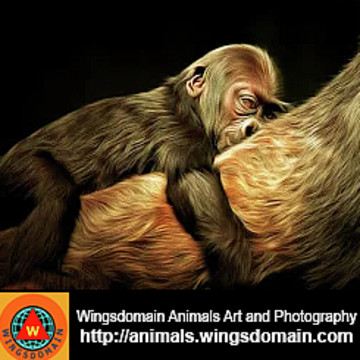 Animals Photography Collection