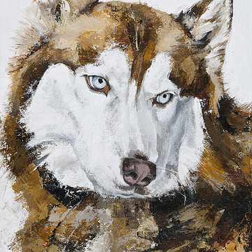 Animals Portraits Collection