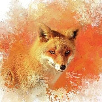 Animals-Wildlife Collection