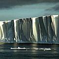 Antarctica Collection