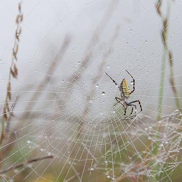 Arachnids Collection