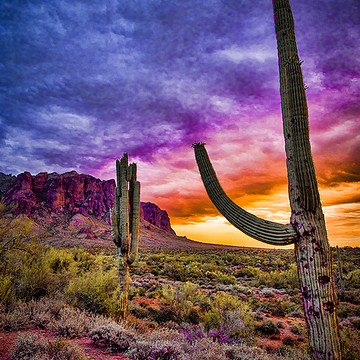 Arizona - Cactus Desert and Sunsets Collection