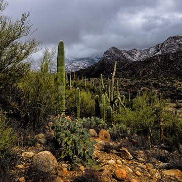 Arizona Landscapes Collection