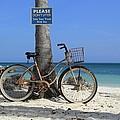 Art Bike Collection