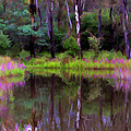 Artistic Australian Landscapes Collection