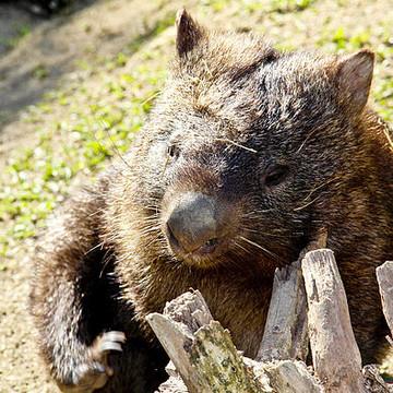 Australian Animals Collection