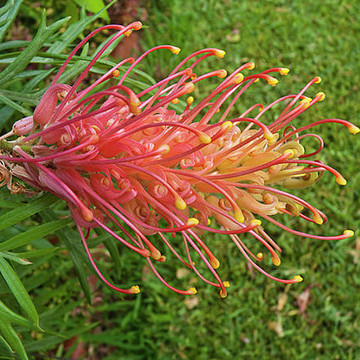 Australian Flora Collection