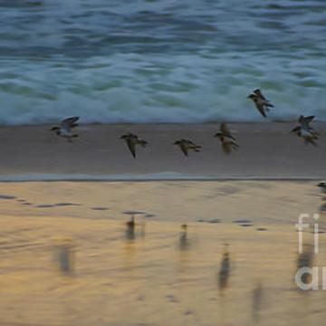Australian Native Birds Collection