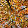 Autumn 2012 Collection