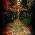 Autumn Color Collection