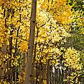Autumn Colors Fine Art Photographs Collection
