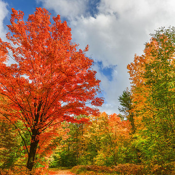 Autumn Colors Collection