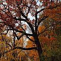 Autumn in Massachusetts Collection