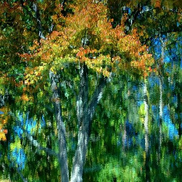 Autumn Light Collection
