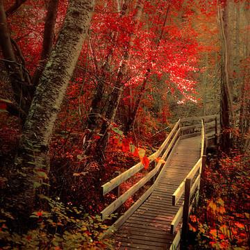 Autumn Magic Collection
