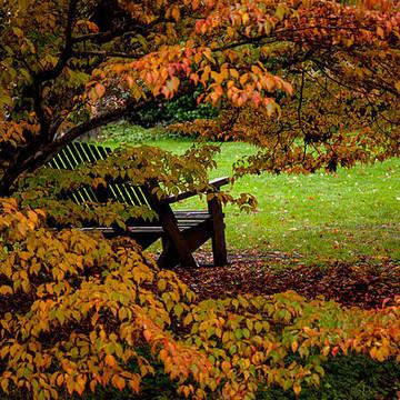Autumn Palette Collection