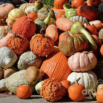 Autumn Pumpkins Photo Gallery Collection