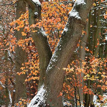 Autumn Scenes Collection