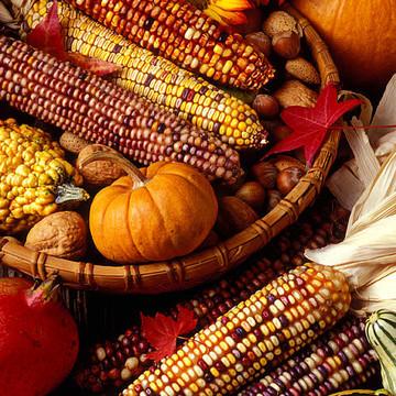 Autumn Still Life Collection