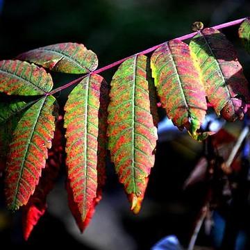Autumn Views Collection