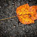 Autumn wonders Collection