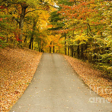 Autumnal Views Collection