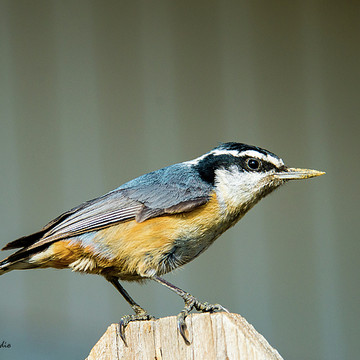 Backyard Birds Collection
