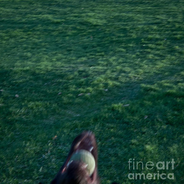 Ball obsession series Collection