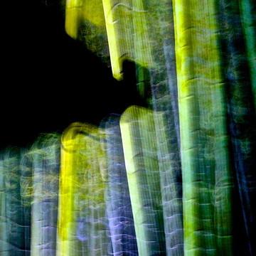 Bamboo Spirit Dance Collection
