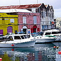 Barbados Antigua and Roatan Collection
